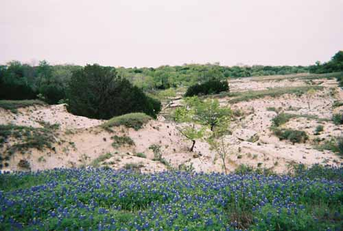 Bluebonnet badlands