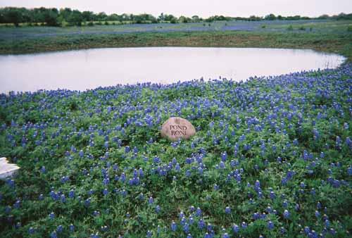 Pond Roni
